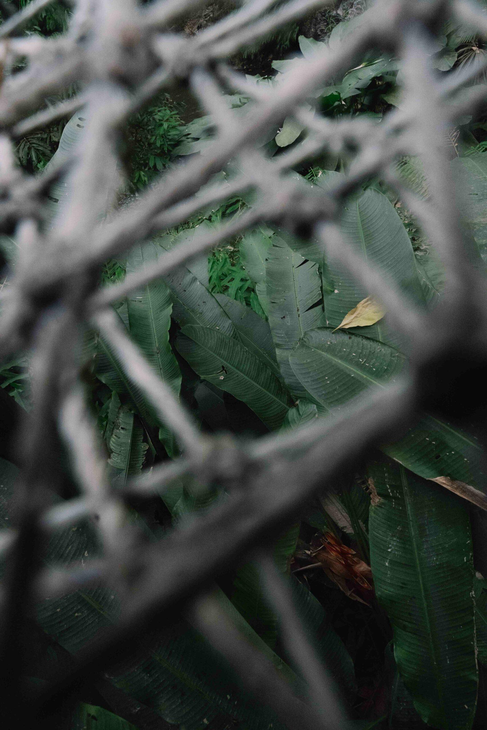 jungle_nature_métal_barbelés_hugo_clément