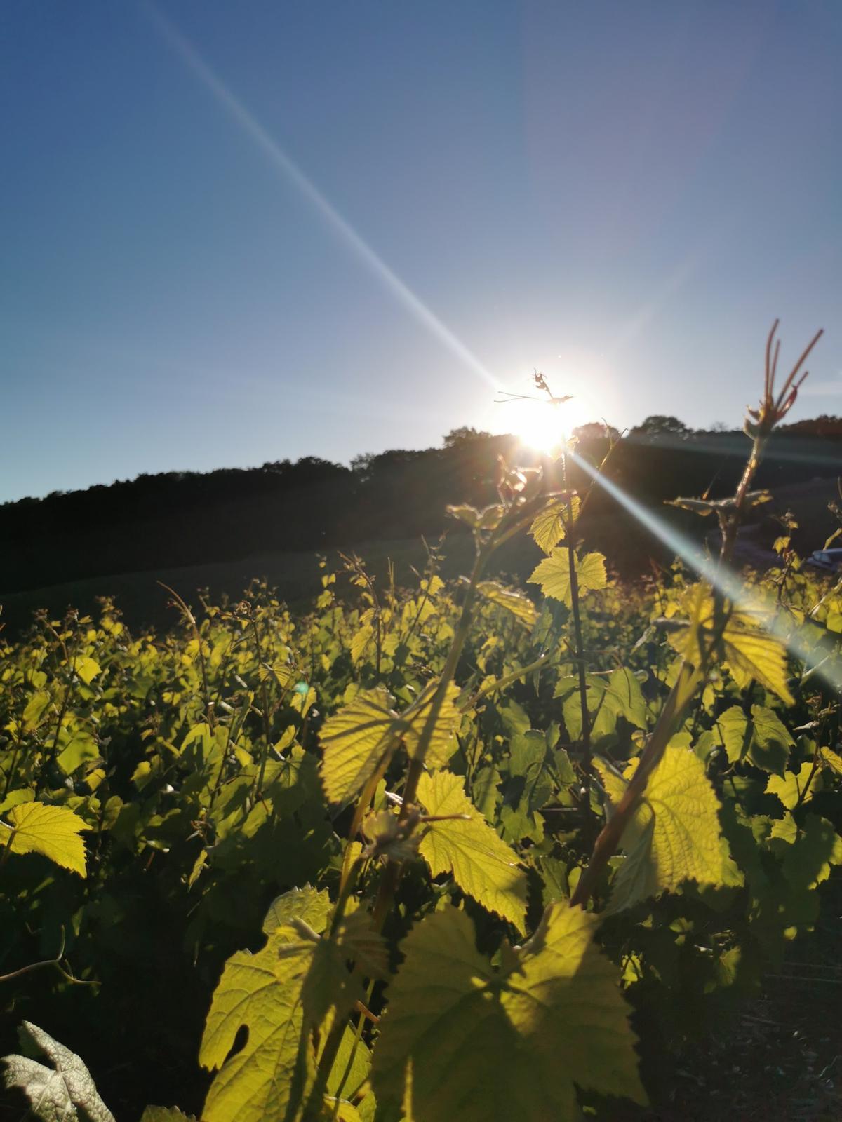 vignes_soleil_vins